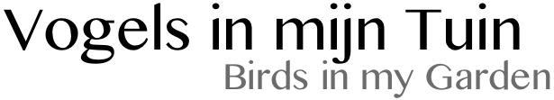 Vogelgedrag
